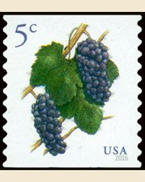 #5038 - 5¢ Pinot Noir Grapes