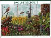 Tranquil Longleaf Pine Forest