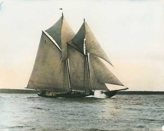 Bluenose Side View